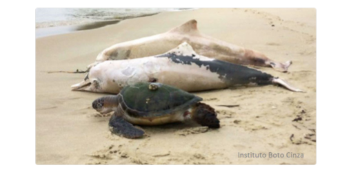 Dead dolphins and sea turtles
