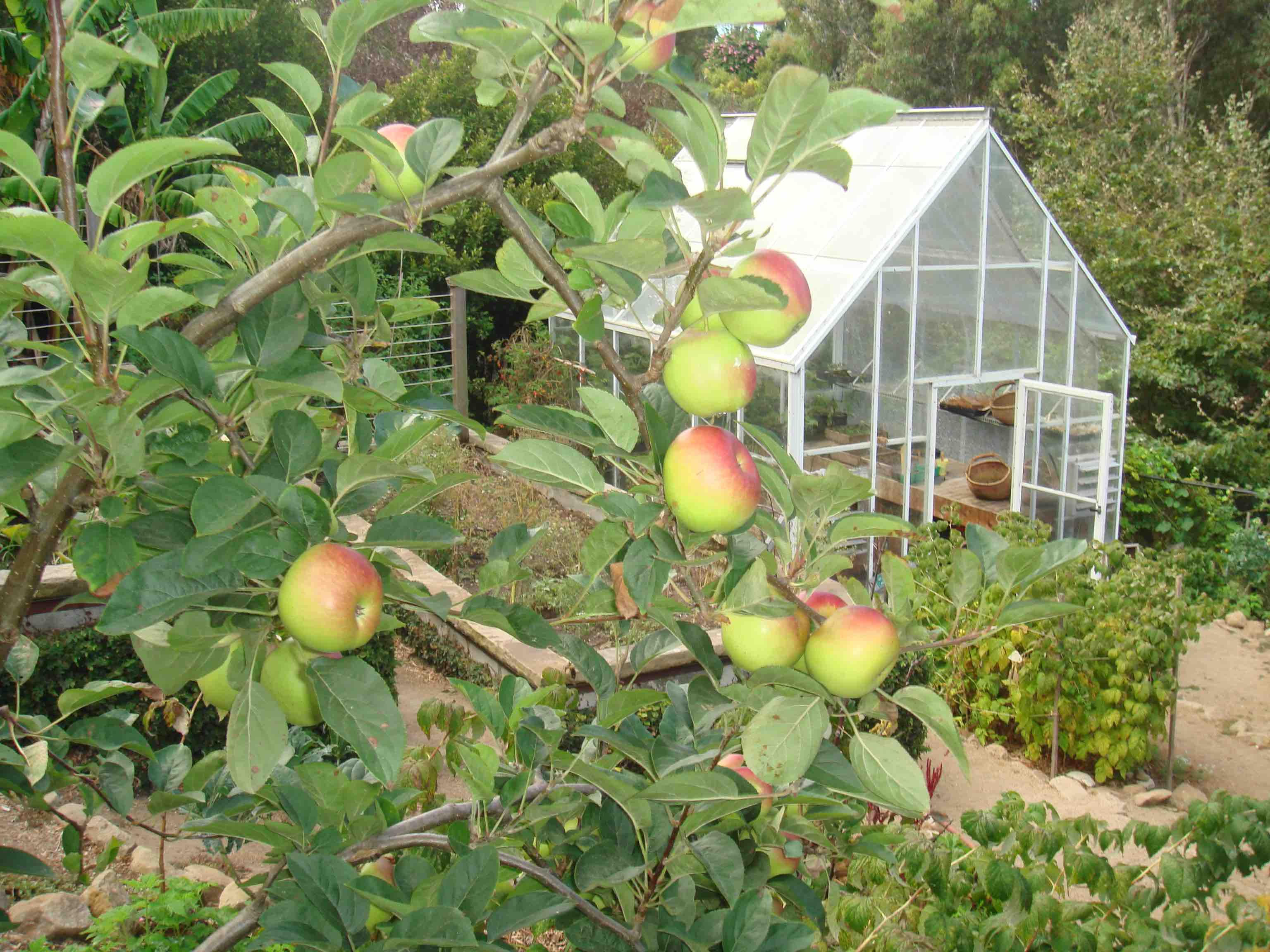 Fossil Fuel Pollution - Apple Trees
