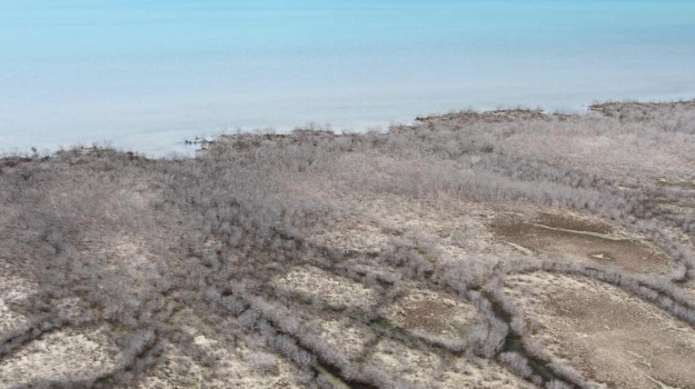 Climate Crisis - Dead Mangroves in Australia