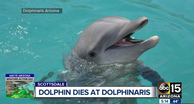 Empty the Tanks - Dolphin Dies in Arizona