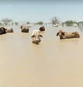 Starving Animals