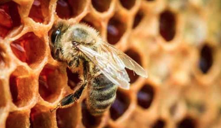 America's Bees